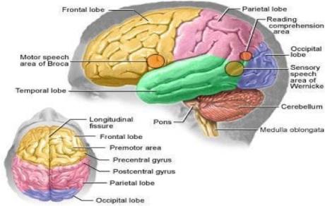 The Brain Element