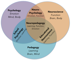 Neuropedagogy Synthesis