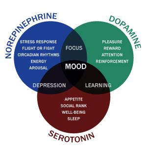 Norepinephrine-Dopamine-Serotonin Venn